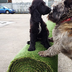 dog-friendly-artificial-grass