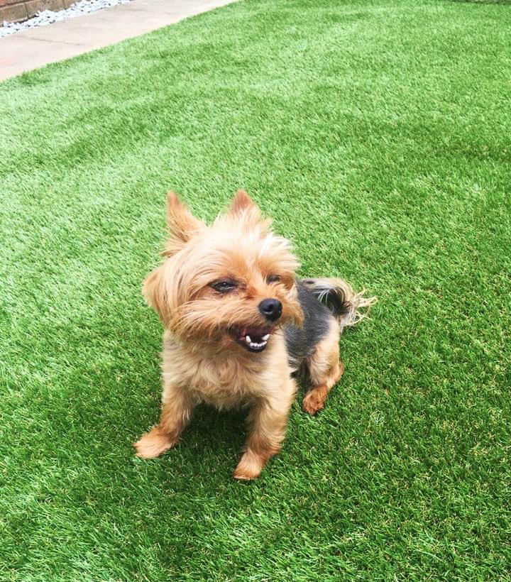 Free Dogs In Stratford