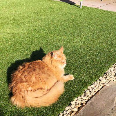 PU Pets Ultra Artificial Grass